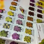 цветы оптом по низким ценам