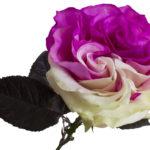 Garden-Pink-White