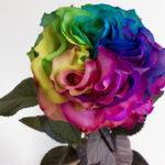 Garden-Rainbow