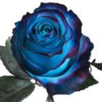 Sweetness-Blue