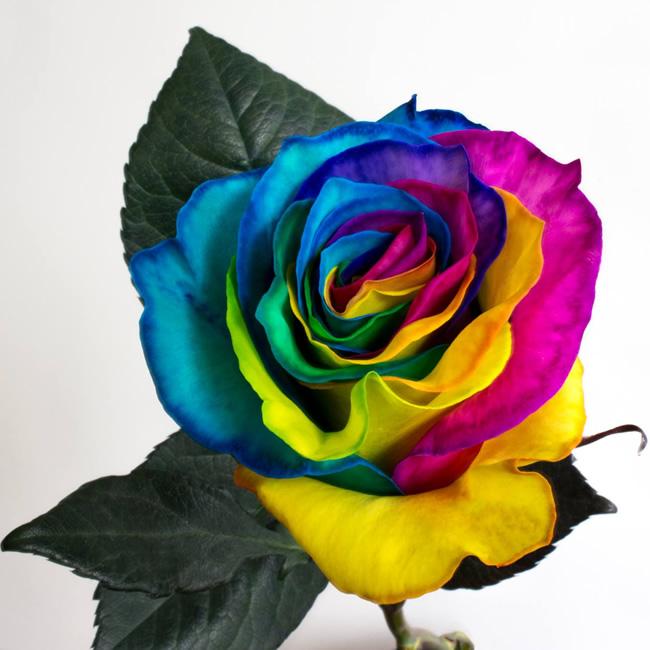 Цветы оптом нижний новгород радуга